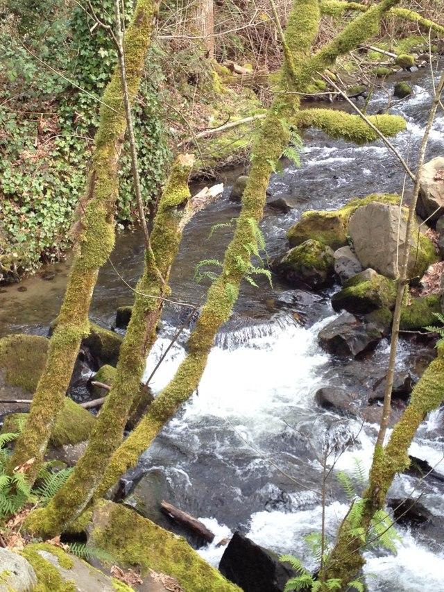 AT Grand Ridge Hike-12